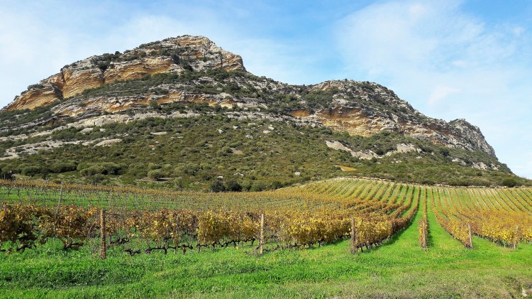 Patrimonio paysage vignes dégustation vin