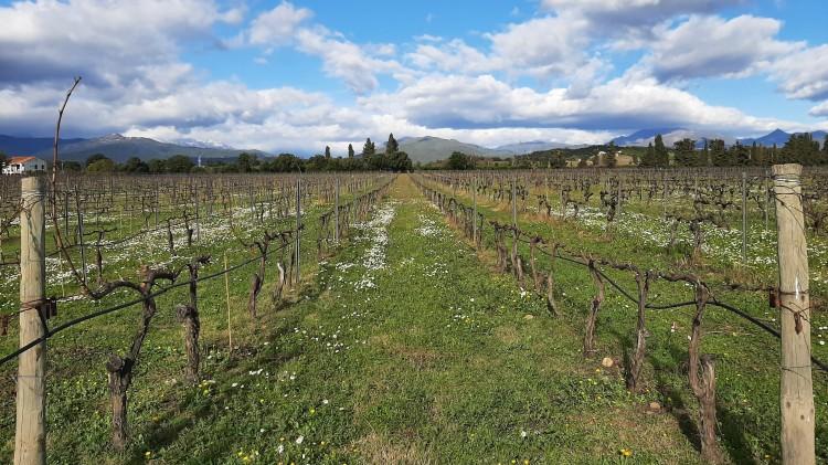 Vignes Plaine Corse dégustation vin